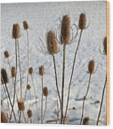 Prairie Seedheads Wood Print