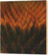 Prairie Splendor Wood Print