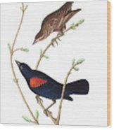 Prairie Starling Wood Print