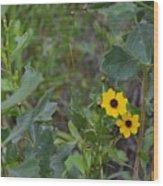 Prairie Tickseed Wood Print