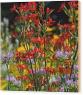 Prairie Wildflowers 2 Wood Print