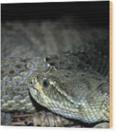 Prarie Rattle Snake Wood Print