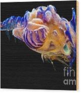 Prawn Larva Wood Print