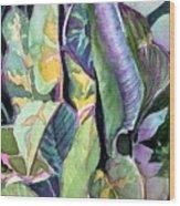 Pray Plant Wood Print