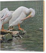 Prayer Of The Pelicans Wood Print