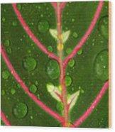 Prayer Plant Vertical Wood Print