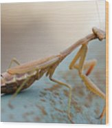 Praying Mantis Close Up Wood Print