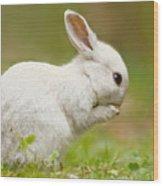 Praying White Rabbit Wood Print