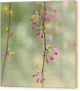 Pre Blossoms Wood Print