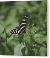 Precious Black And White Zebra Butterfly In The Spring Wood Print
