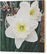 Precious Daffodils Wood Print