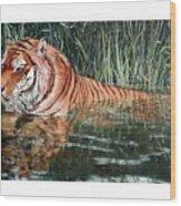 Predator Wood Print