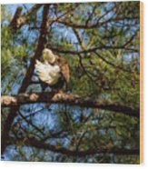 Preening Bald Eagle Wood Print