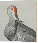 Preening Crane Wood Print