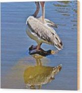 Preening Pelican Wood Print