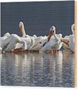 Preening Pelicans Wood Print