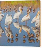 Preening Primping Pelicans Wood Print