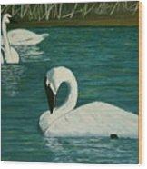 Preening Swans Wood Print