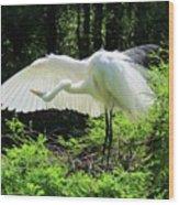 Preening The Wings Wood Print