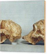 Prehistoric Skulls Wood Print