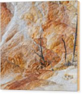 Prehistoric Trees Wood Print