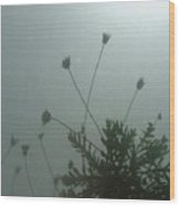 Pressed Daisy Bush Green Wood Print