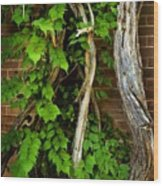 Preston Wall Vine Wood Print