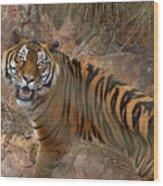 Pretoria Zoo Wood Print