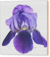 Prettiest Purple Iris Wood Print