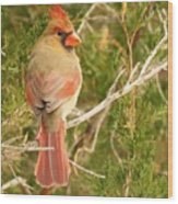 Pretty As A Picture  Wood Print by Lori Frisch