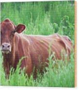 Pretty Brown Cow  Wood Print