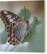 Pretty Butterfly Resting On The Leaf Wood Print