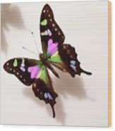 Pretty Butterfly Wood Print