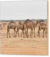 Pretty Camels All In A Row Wood Print