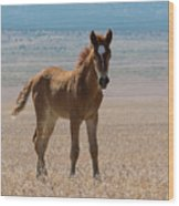 Pretty Colt Wood Print by Nicole Markmann Nelson
