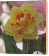 Pretty Daffodil Wood Print