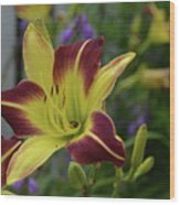 Pretty Flowering Lily In A Garden  Wood Print