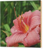 Pretty Flowering Pink Lily In A Garden Wood Print