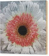 Pretty Gerbera Macro Wood Print