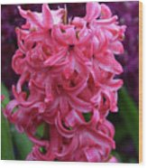 Pretty Hot Pink Hyacinth Flower Blossom Blooming Wood Print