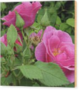 Pretty In Pink 3 Wood Print