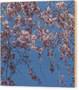 Pretty In Pink - A Flowering Cherry Tree And Blue Spring Sky Wood Print