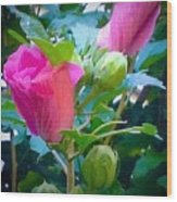 Pretty In Pink Hibiscus Flowers And Buds Wood Print