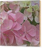 Pretty In Pink Hydrangeas Wood Print
