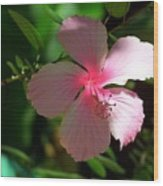Pretty In Pink Photograph Wood Print
