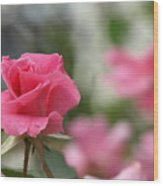 Pretty In Pink Rose Wood Print