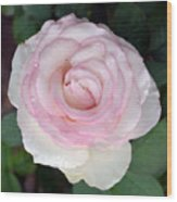 Pretty In Pink Rose Wood Print