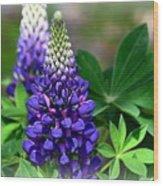 Pretty In Purple Wood Print