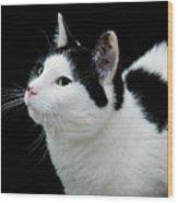 Pretty Kitty Cat 2 Wood Print