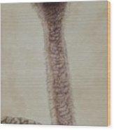 Pretty Lady -female Ostrich Wood Print